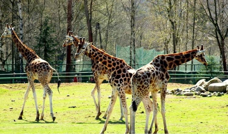 Гданськ зоопарк