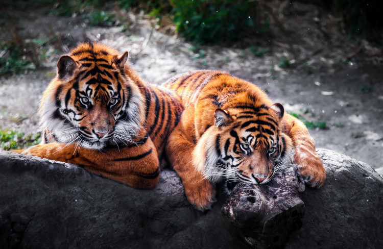 Зоопарк Бляйдорп