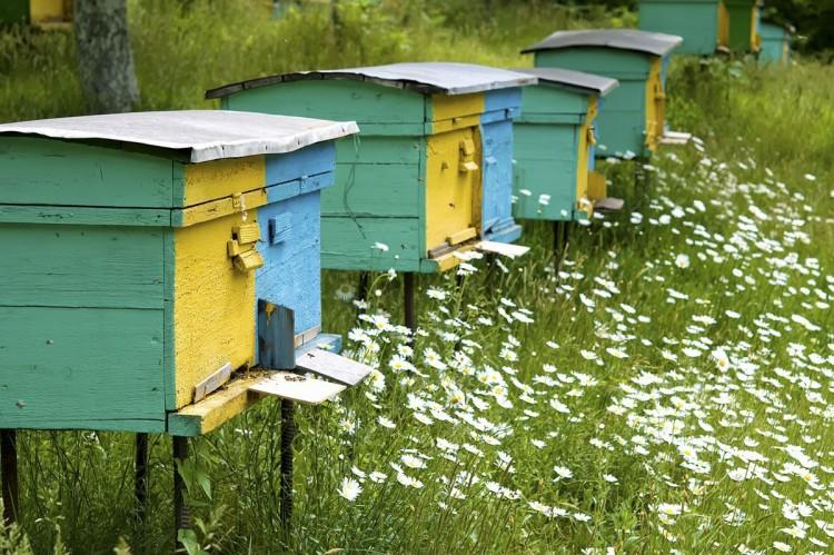 Музей пчел