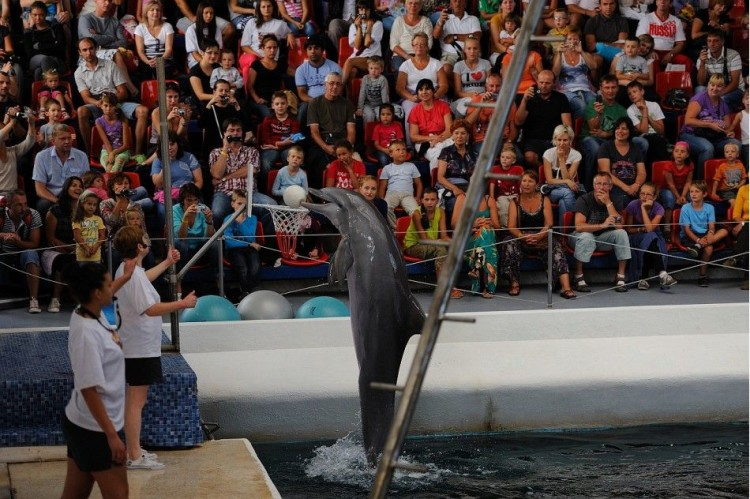Дельфинарий «Феста»